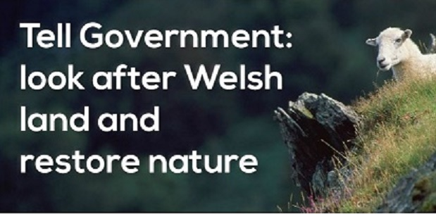 Tell Welsh Government you want a policy that does more for nature and society